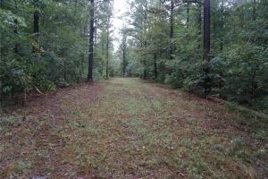 Romulus Road Timber & Hunting Tract - Tuscaloosa County, AL