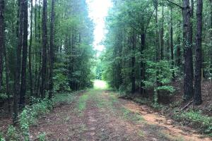 Moundville Hunting, Residential & Recreational Tract