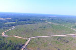 Rosindale Hunting and Timberland Investment - Bladen County, NC