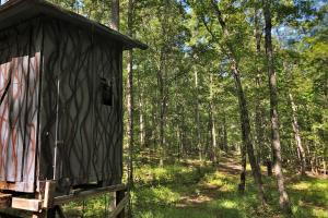 Cottondale Old Growth Timber and Hunting Property - Tuscaloosa County, AL