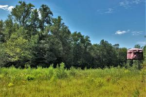 Pondville Longleaf Plantation and Hunting Investment - Bibb County, AL