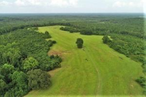 Highland Home Pasture and Hunting Property - Crenshaw County, AL