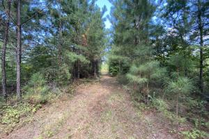 County Road 264 Timber & Recreational Tract - Chilton County, AL