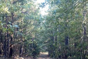 Oakmulgee Creek Hunting and Timber Investment - Perry County, AL