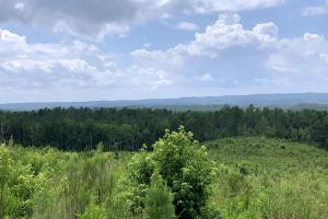 Recreation, Timber and Hunting Land - Coosa County, AL