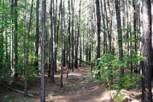 Berkeley County Timber Investment