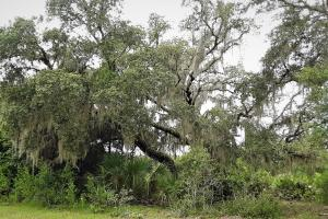 Interlachen Ranch, Recreation and Investment Tract  in Putnam County, FL (6 of 42)
