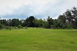 Interlachen Ranch, Recreation and Investment Tract  in Putnam County, FL (7 of 42)