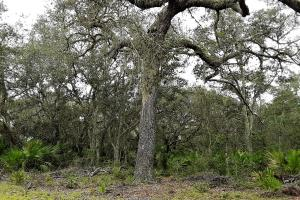 Interlachen Ranch, Recreation and Investment Tract  in Putnam County, FL (3 of 42)