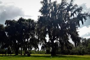 Interlachen Ranch, Recreation and Investment Tract  in Putnam County, FL (2 of 42)
