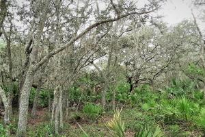 Interlachen Ranch, Recreation and Investment Tract  in Putnam County, FL (9 of 42)