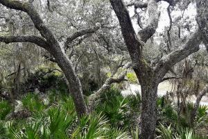 Interlachen Ranch, Recreation and Investment Tract  in Putnam County, FL (42 of 42)
