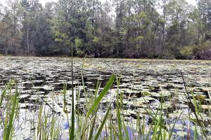 Interlachen Ranch, Recreation and Investment Tract  in Putnam County, FL (12 of 42)