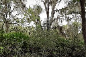Interlachen Ranch, Recreation and Investment Tract  in Putnam County, FL (23 of 42)