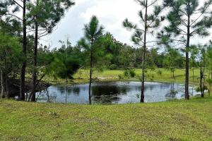 Interlachen Ranch, Recreation and Investment Tract  in Putnam County, FL (26 of 42)