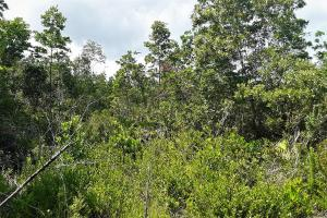 Interlachen Ranch, Recreation and Investment Tract  in Putnam County, FL (36 of 42)