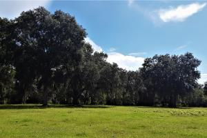 Interlachen Ranch, Recreation and Investment Tract  - Putnam County, FL