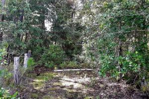 Interlachen Ranch, Recreation and Investment Tract  in Putnam County, FL (28 of 42)