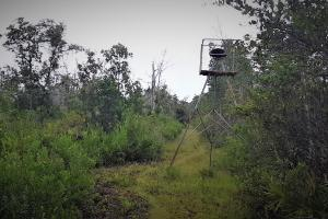 Interlachen Ranch, Recreation and Investment Tract  in Putnam County, FL (33 of 42)