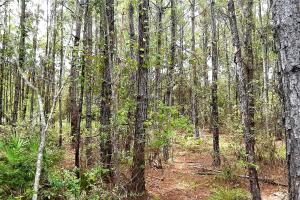 Interlachen Ranch, Recreation and Investment Tract  in Putnam County, FL (40 of 42)