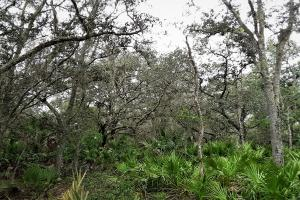 Interlachen Ranch, Recreation and Investment Tract  in Putnam County, FL (20 of 42)