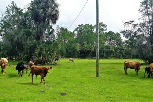 Interlachen Ranch, Recreation and Investment Tract  in Putnam County, FL (25 of 42)