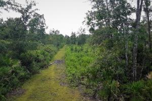 Interlachen Ranch, Recreation and Investment Tract  in Putnam County, FL (39 of 42)