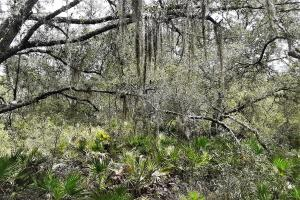 Interlachen Ranch, Recreation and Investment Tract  in Putnam County, FL (41 of 42)