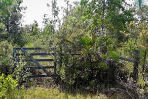 Interlachen Ranch, Recreation and Investment Tract  in Putnam County, FL (37 of 42)