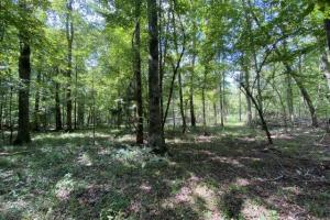 Black Belt Timber Investment & Hunting - Macon County, AL