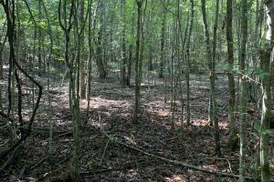 Recreational, Hunting, Investment Land Near Lake Martin - Coosa County, AL