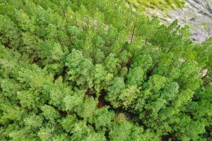 Fruitdale Timber & Hunting Investment - Washington County, AL