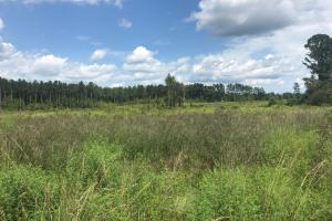 Highway 19 Homesite & Hunting Tract - Marion County, AL