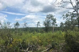 I-22 Hunting And Timber Tract - Marion County, AL