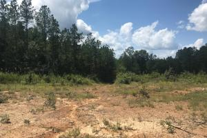 Marion County Hunting & Timber Tract - Marion County, AL