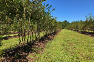 Blueberry Orchard (42 of 71)