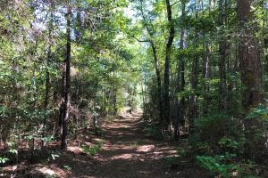 Trail through Hardwood Forest  (45 of 71)