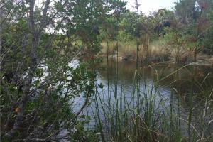 Sanibel River Access (12 of 21)