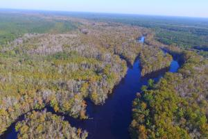 Black River Hunting Land - Pender County, NC