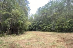 Hwy 219 Timber and Hunting Investment Tract - Perry County, AL