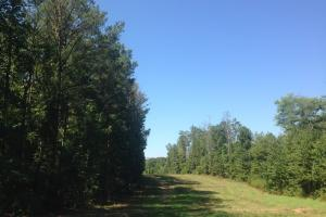 Tallapoosa Recreational Timber Tract - Haralson County GA