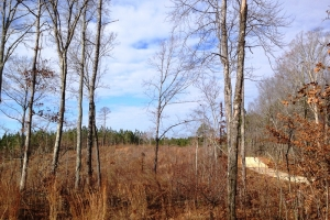Large Acre Recreational Tract - Haralson County GA