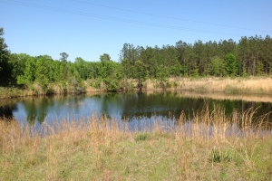 Private Homesite with Pond  - Montgomery County GA