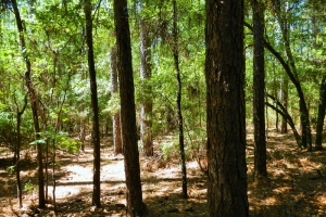Leakesville Recreational Timber Investment - Greene County MS