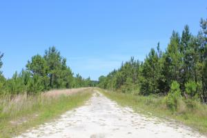 Bonneau Hunting & Timber Land - Berkeley County SC