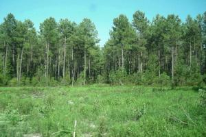 Bonneau Recreational and Timber Investment - Berkeley County SC