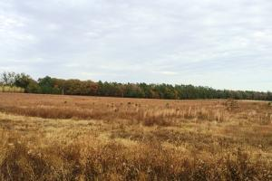 Private Estate or Small Farm Tract - Barnwell County SC