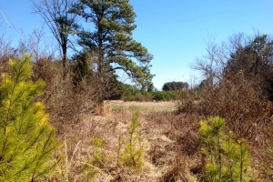 Secluded Recreational & Timber Tract