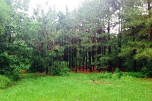 <p>Recreational land for sale GA, Georgia rural homsite land for sale</p>