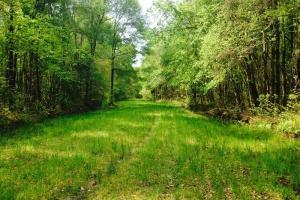 Hunting Camp with Lodge - Screven County GA